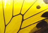 Fjäril wing detalj gula mönster — Stockfoto