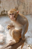 Animal monkey — Stock Photo