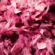 Pink feather — Stock Photo