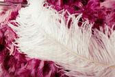 Feathers — Stock Photo