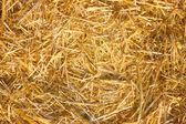Hay, Straw — Stock Photo
