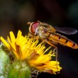 Hoverfly — Stock Photo #6975668