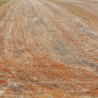 Background of harvested field — Stock Photo #7025505