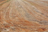 Background of harvested field — Stock Photo