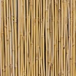 Bamboo fence — Stock Photo #7044014