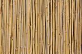 Bambusowy płot — Zdjęcie stockowe