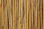 Background of bamboo fence — Stock Photo