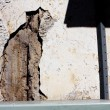 Phenomenon face of cat on wall — Stockfoto
