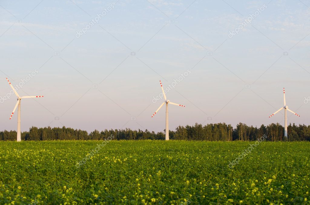 Three windmills in a colza field close view  Stock Photo #6789333
