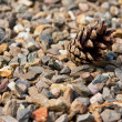 Stock Photo: Pinecone