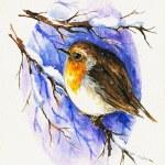 Robin in winter — Stock Photo #7383893
