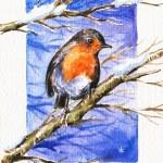 Robin in winter — Stock Photo