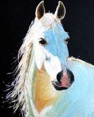 Graues pferd — Stockfoto