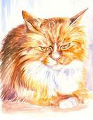 Persian cat — Stock Photo