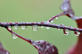 Droplets on a branch — Stock Photo