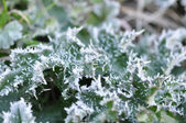 Frosty Leaves — Stock Photo
