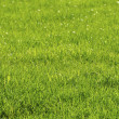 Lawn in spring — Stock Photo