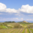 Vineyard in Tuscany, Italy — Stock Photo #6777423