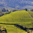 Vineyard landscape in Italy — Stock Photo