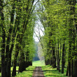 An alley in spring — Stock Photo #6777557