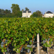 Stock Photo: Bordeaux vineyard