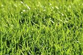 Dew on the lawn — Stock Photo