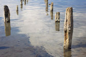 The old wooden pillars in the water salty Dead Sea — Stock fotografie
