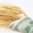 Royalty-Free Stock Photo: Wheat and dollars