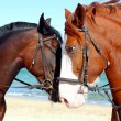 Two heads of beautiful horses — Stock Photo