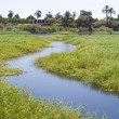 Stock Photo: Small stream through marshland
