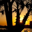 Sunset through palm trees — Stock Photo