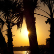 Постер, плакат: Sunset through palm trees