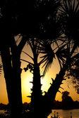 Sunset through palm trees — Stock Photo