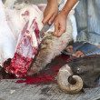 Sheep being traditionally killed for the Eid festival - Stockfoto