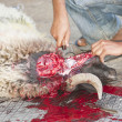 Sheep being traditionally killed for Eid festival — Stock Photo #7626396