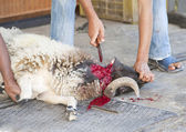 Sheep being traditionally killed for the Eid festival — Foto Stock