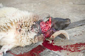 Sheep being traditionally killed for the Eid festival — Stockfoto