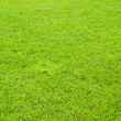 Bright green grass - 图库照片