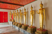 Many of the golden Buddha statue stand — Stock Photo