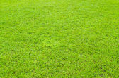 Bright green grass — Stock Photo