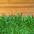 Below Green Grass on Wood — Stock Photo