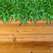 Top Green Grass on Wood — Stock Photo