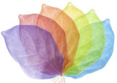 Six Colorful leaf arranged — Stock Photo