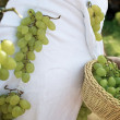 Wine grapes costume - Stock Photo
