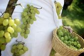 Wine grapes costume — Stock Photo