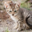 Little one month kitten sitting at pathway — Stock Photo