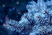 Magic branches of blue spruces at night — Stock Photo