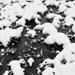 Snowy meadow — Stock Photo