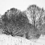 Snow in mountains — Stock Photo #7474418