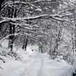 Stock Photo: Forest snow